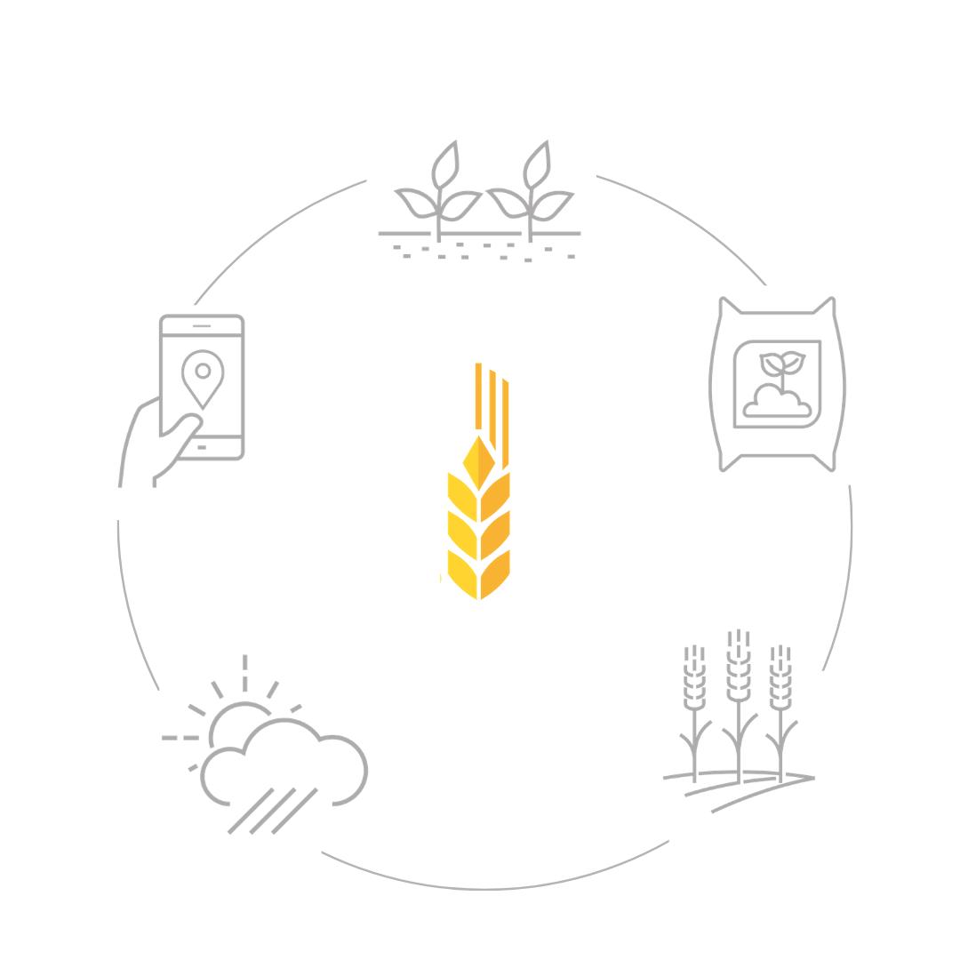Funzionamento grano.net
