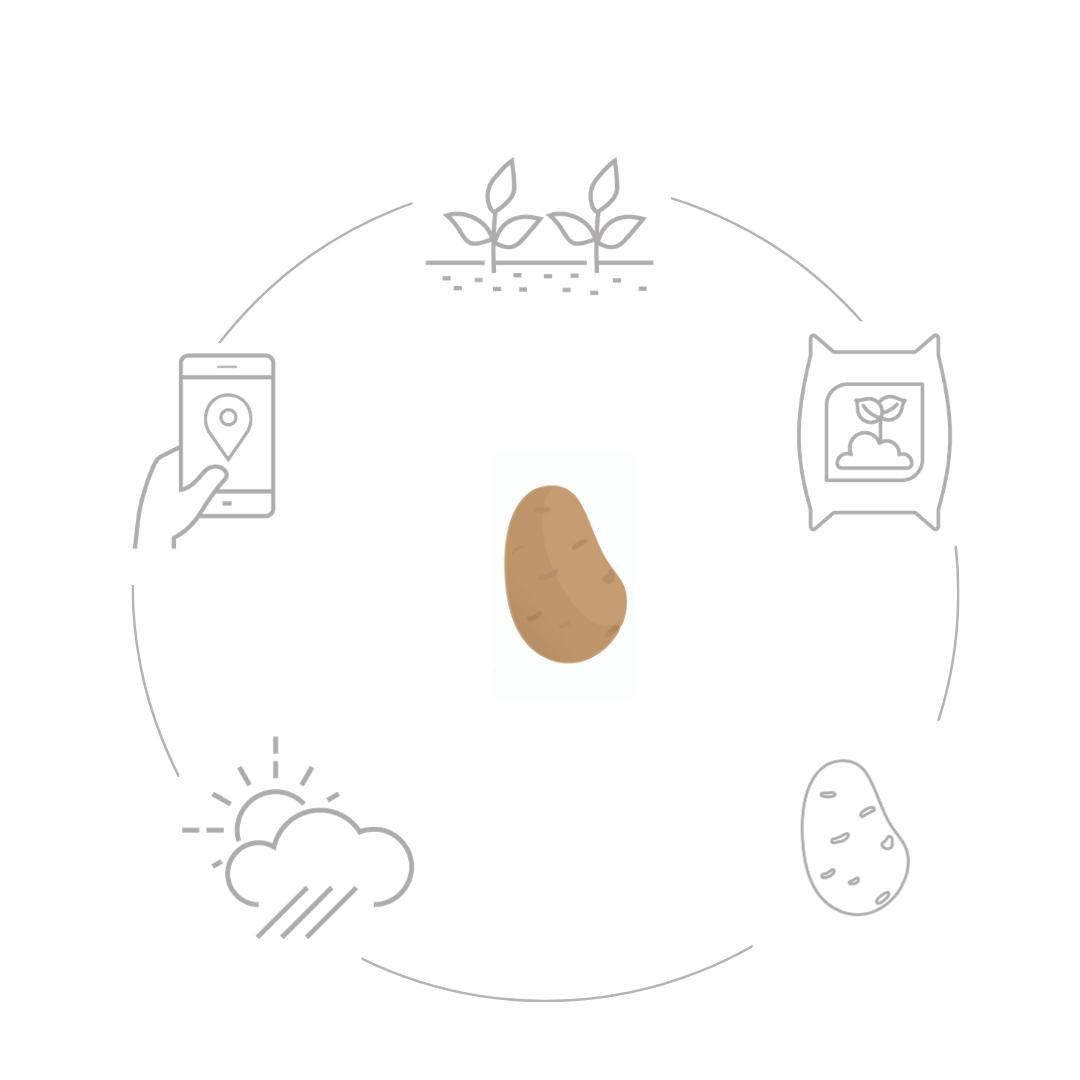 Funzionamento patata.net