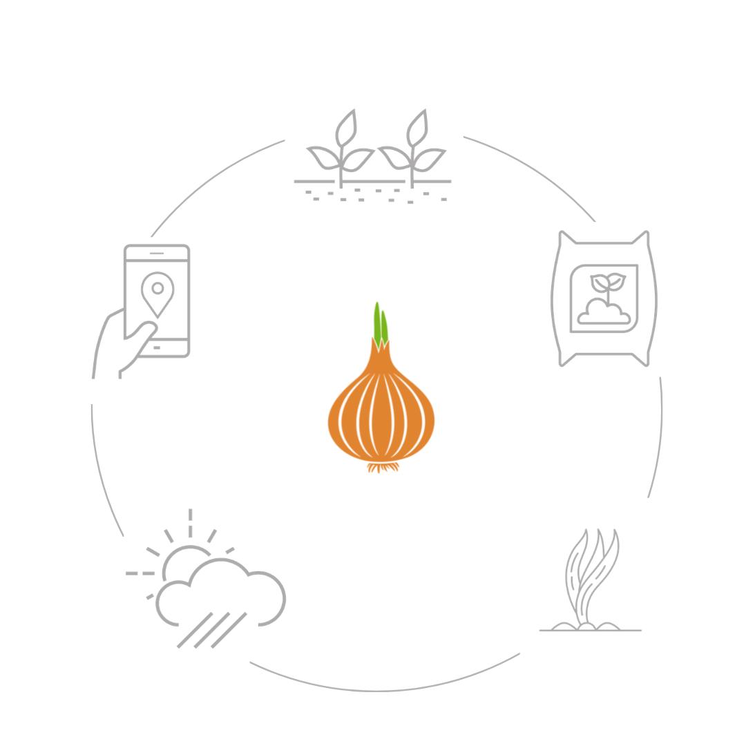 Funzionamento cipolla.net