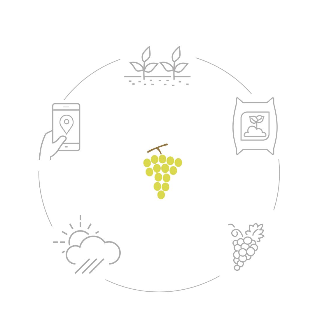 Funzionamento uva cellulare